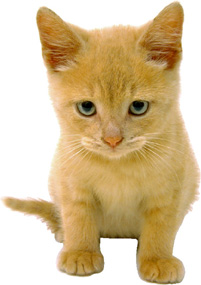 KittenWellness